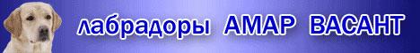 Питомник ЛАБРАДОРОВ Амар Васант